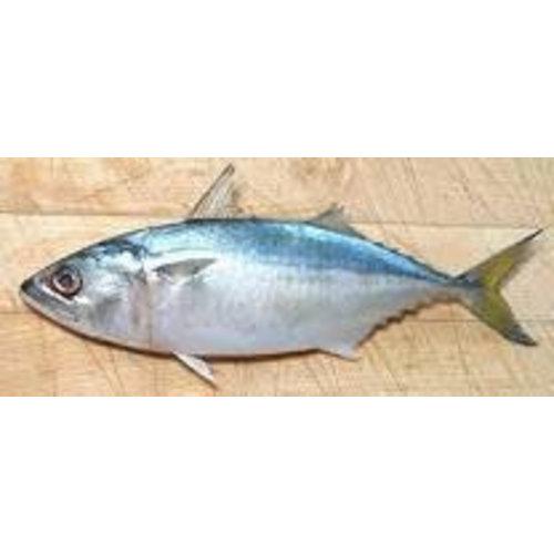 Asean Seas Whole Indian Mackerel 1kg