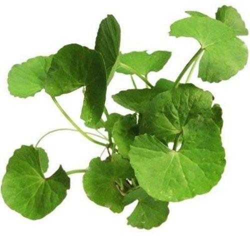 Bai Bua Bok (Pennyworth Leaf) 100g