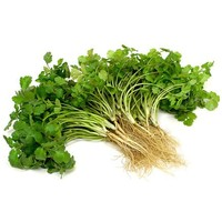 Coriander with Root 80g