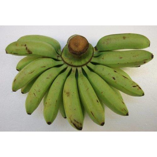 Apple Banana ( กล้วยไข่ กิโล) -2kg (pre-order)