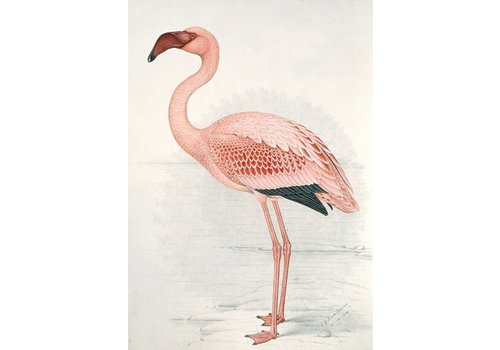 IXXI Wanddecoratie - Flamingo Claude Finch-Davies