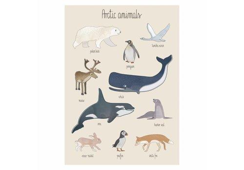 Sebra Poster Arctische dieren