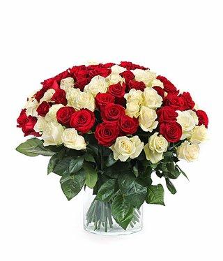 Weiße und rote Rosen
