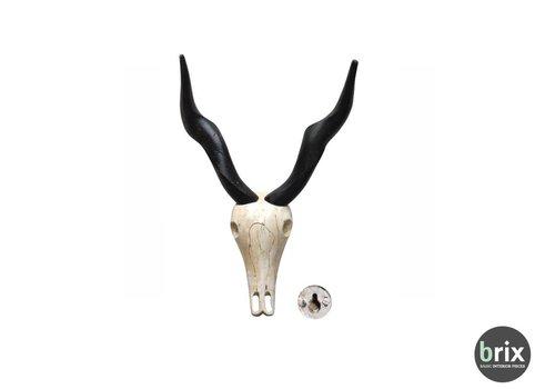 Brix Skull A