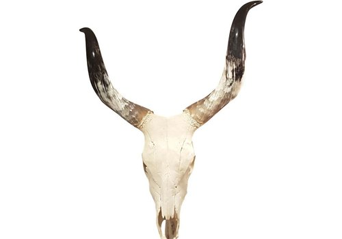 Homestore Homestead Cow Skull Wall Decor Large