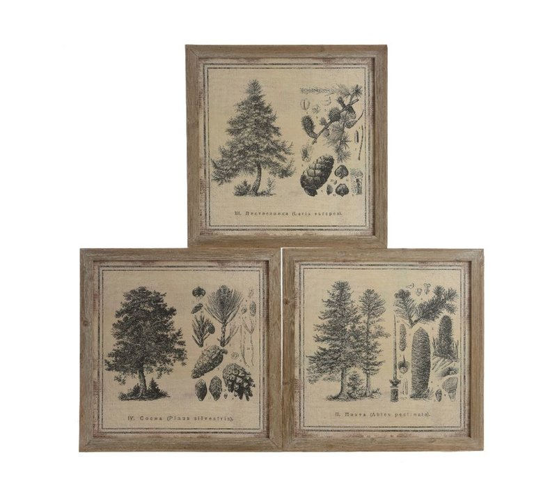 Canvas Paintings of Pine Trees - 3 assorted