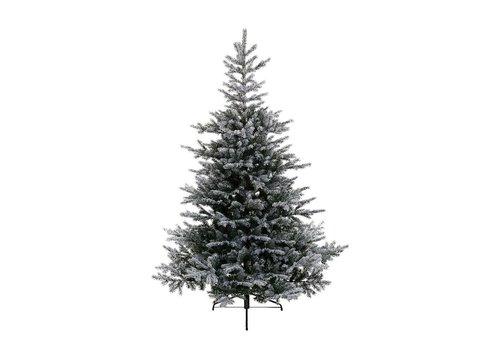 Homestore Snowy Grandis Fir Christmas Tree 210cm (7ft)