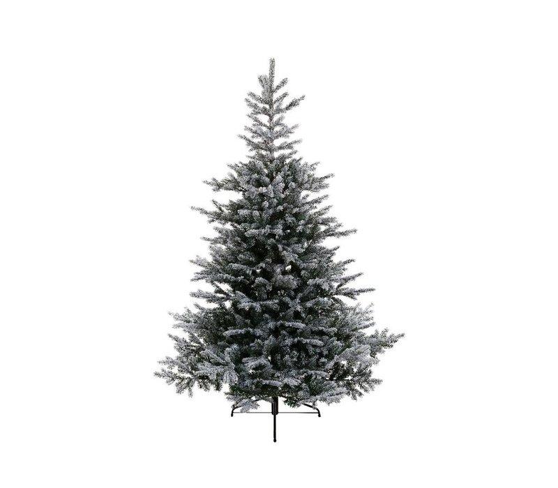 Snowy Grandis Fir Christmas Tree 210cm (7ft)