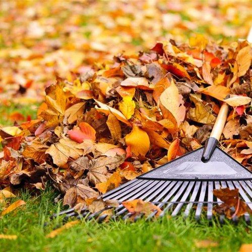 November Gardening Tips