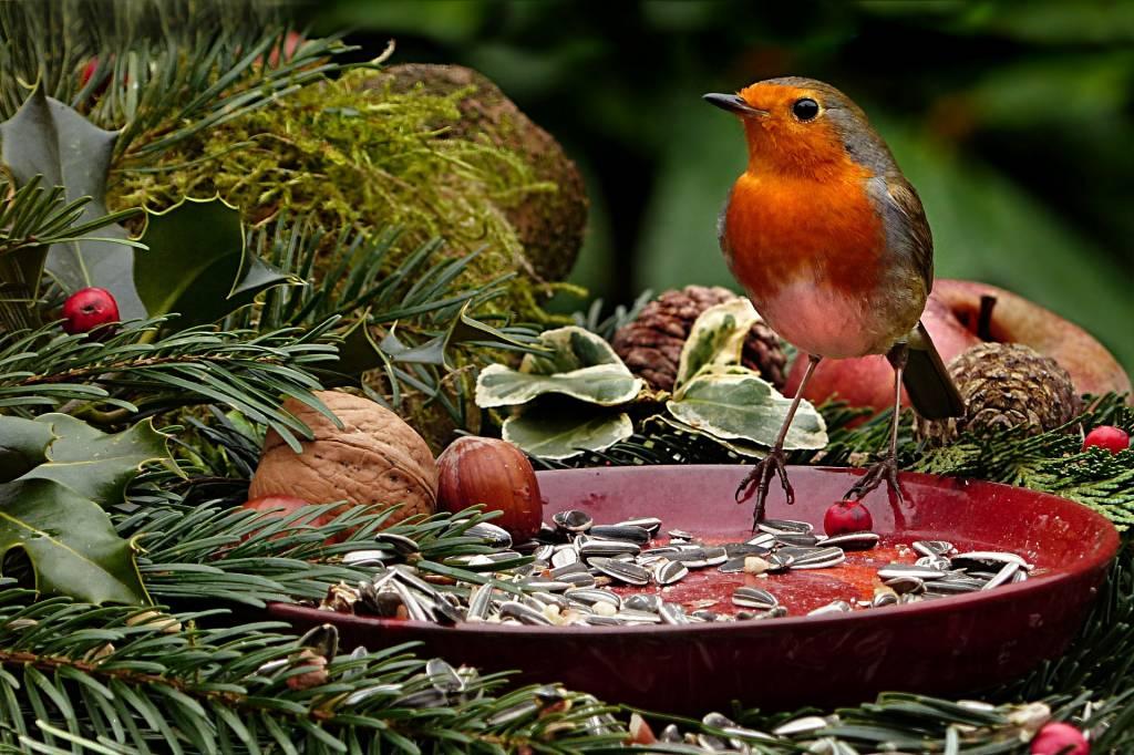 Feeding Garden Birds In Harsh Weather