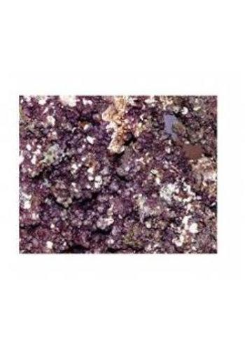 1 kg levend steen /live rock indonesië