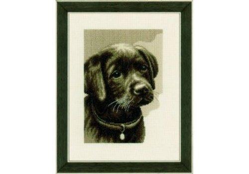 Vervaco Labrador pup