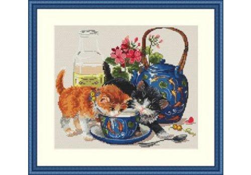 Merejka Kittens & Milk
