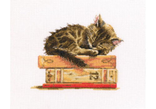 RTO Cat's Dream