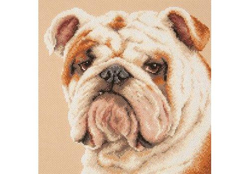 Chudo Igla Borduurpakket Bulldog