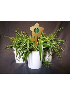 Plant E Plant E Sprout - DIY Plant E pakket
