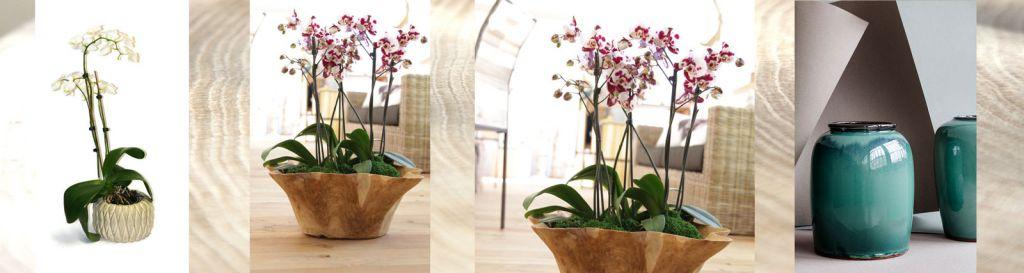 Vasen für alle Themen