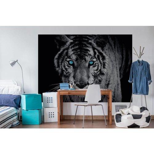 Fototapete Blauäugiger Tiger