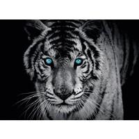 Blauäugiger Tiger - Fototapete 254 x 184 cm