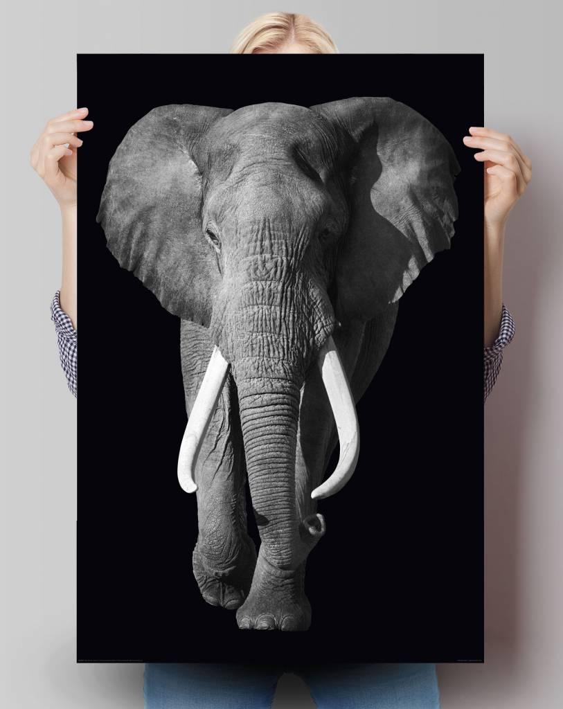 Elefant | Poster - REINDERS!