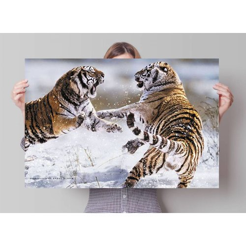 Poster Sibirischer Tiger