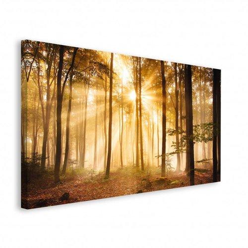 Wandbild Sonnenstrahlen im Wald