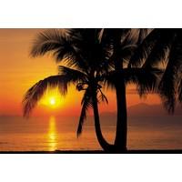 Palmenstrand  - Fototapete 8-teilig 368 x 254 cm