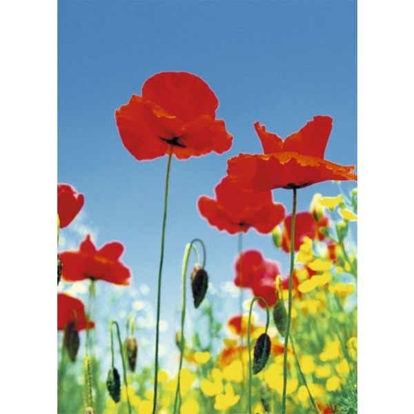 Mohnblumen Feld  - Fototapete 4-teilig 183 x 254 cm