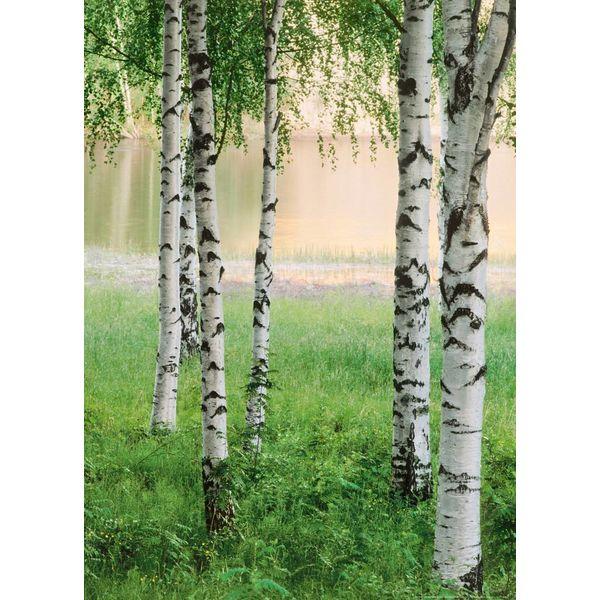 Nordischer Wald  - Fototapete 4-teilig 183 x 254 cm