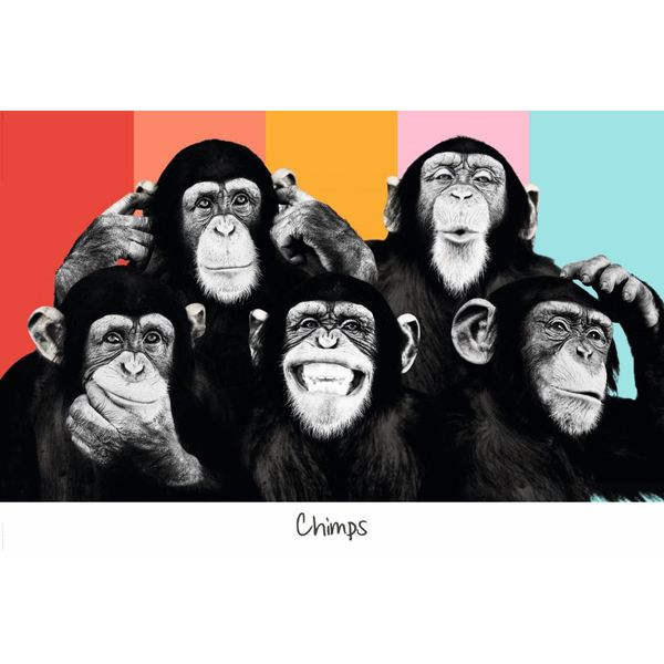the chimp kompilierung poster reinders. Black Bedroom Furniture Sets. Home Design Ideas