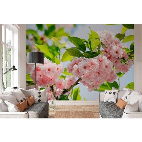 Fototapete Sakura Blüte