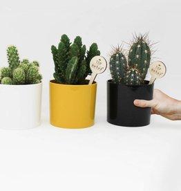 Cactus - uitstekende meter