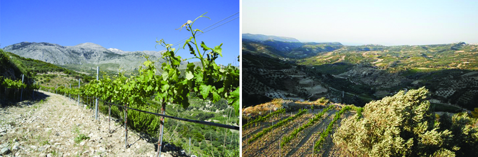 Diamantakis Wines Crete