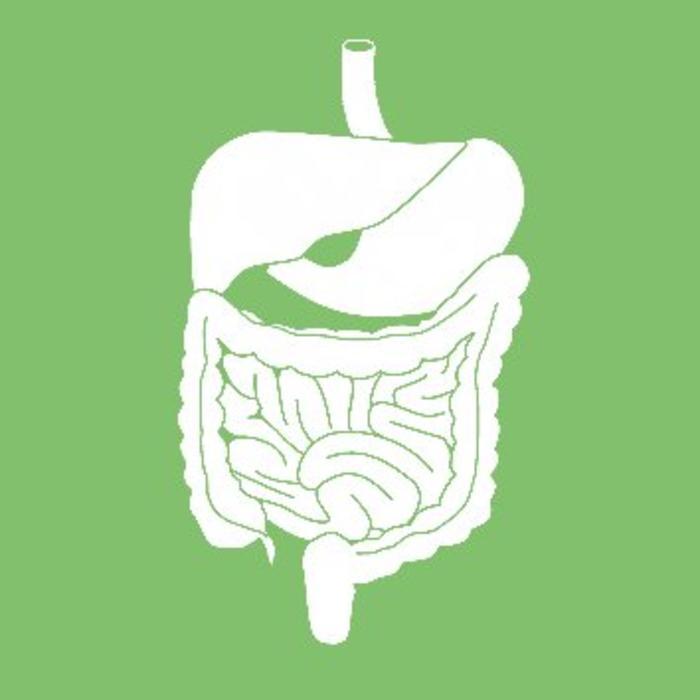 Probiotics & Digestion