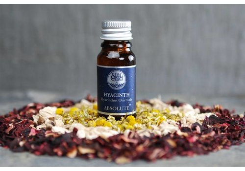 Star Child Essential Oil - Hyacinth Absolute