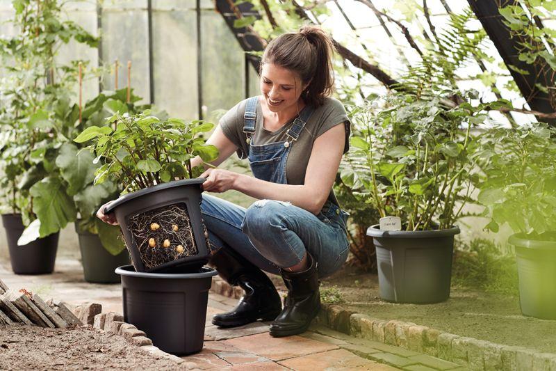 pottenland elho green basics aardappelpot pottenland. Black Bedroom Furniture Sets. Home Design Ideas