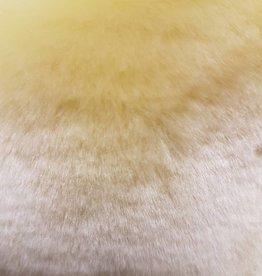 Kitty Fluff Siam - Frühe Morgendämmerung