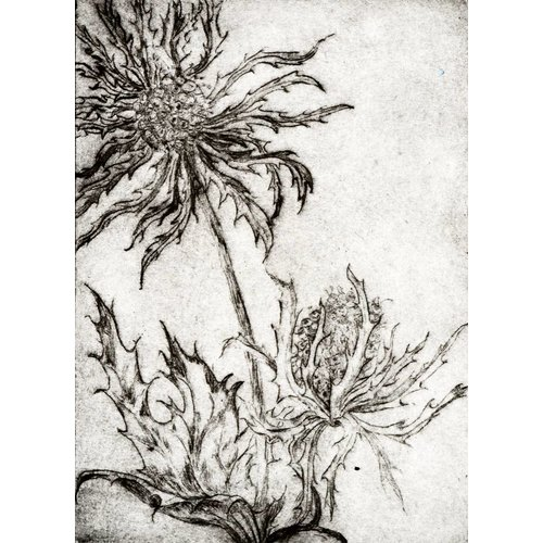 Gwenn Turner Eryngium Alpinum