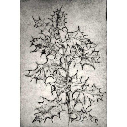 Gwenn Turner Copy of Eryngium Alpinum