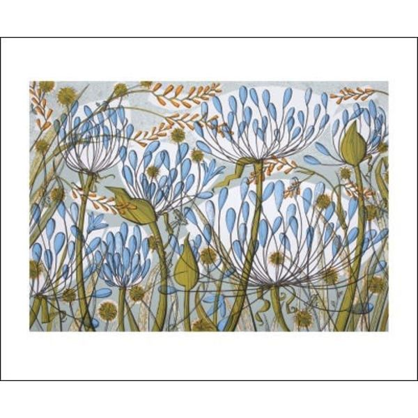 Agapanthus II card by Angie Lewin