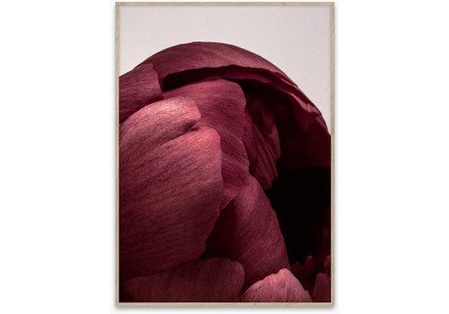 Paper Collective Peonia 01 - 50x70 cm