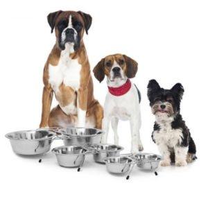 Dieren Benodigdheden, voor uw Hond of Kat
