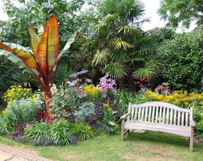 Tropical Gartenpflanzen