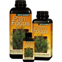 Palm Fokus