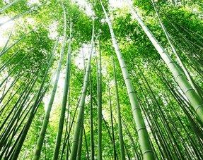 Tropische bamboe