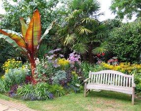 Tropische Tuinplanten