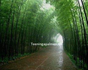 Niet woekerende bamboe