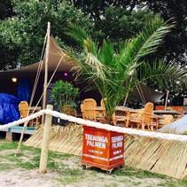 verhuur palmboom  CANARISCHE DADELPALM