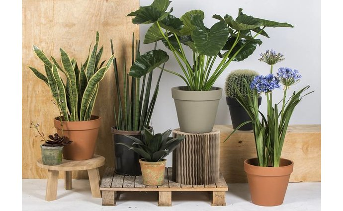 Large assortment of artificial plants