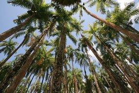 Hoe en wanneer zijn palmen ontstaan en hoe groot is de palmen familie?